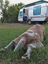 Camping mitten in der Karoo