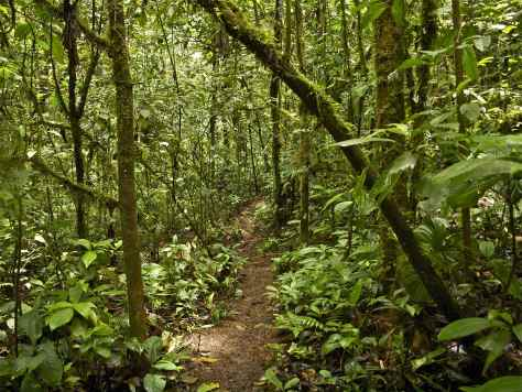 Amazon Jungle Forest Path