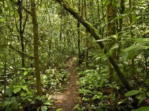 Amazon Jungle Forest Path