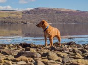 House & Dog Sitting in Dunoon, Scotland