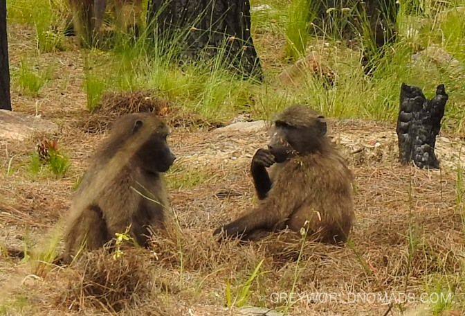 [VIDEO] Baby Monkeys Having Fun In The Wild