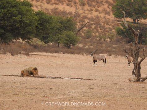 Kgalagadi, South Africa