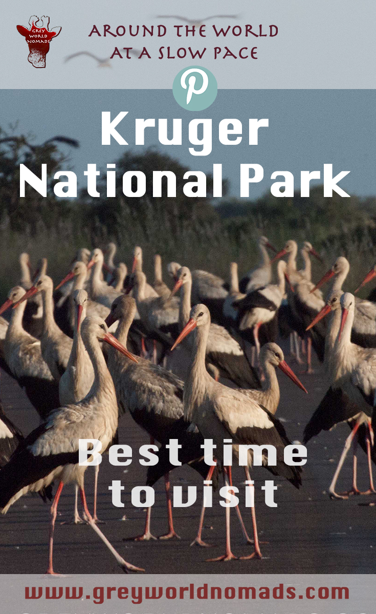 best-time-to-visit-kruger-2