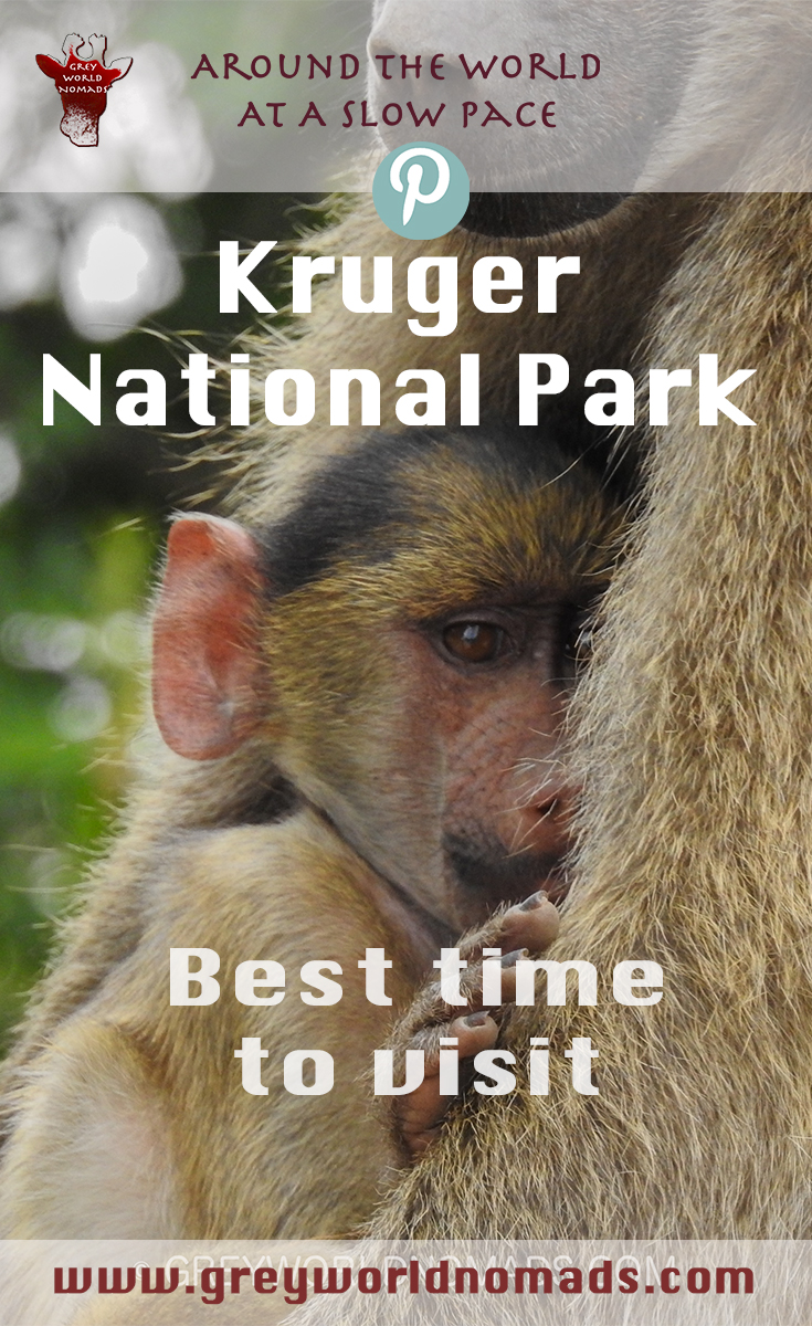 best-time-to-visit-kruger.jpg