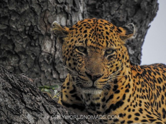 One Month+ In Kruger National Park, South Africa