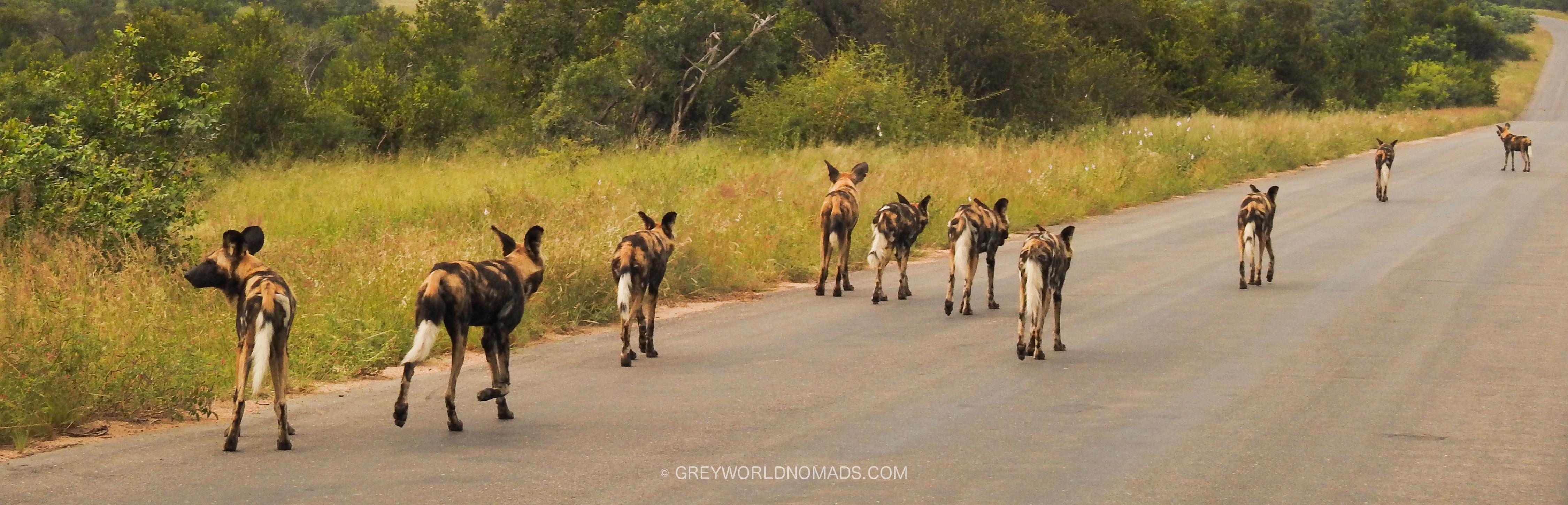 skukuza-kruger-nationalpark-southafrica-24