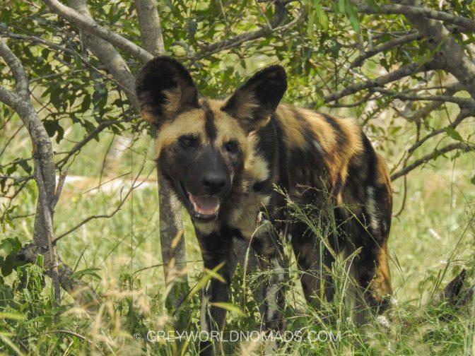 Best time to visit Kruger National Park, South Africa