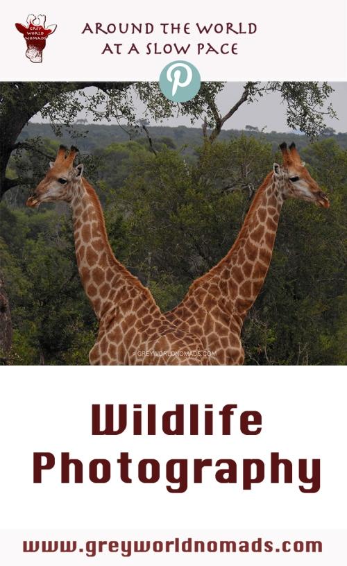 wildlife-photography.jpg